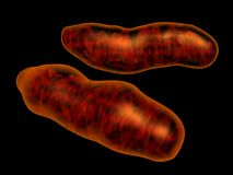 Mitochondria. 3d rendered mitochondria isolated on black. Mitochondria is intracellular organel responsible for energy transformation Stock Image