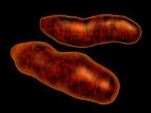 Mitochondria Stock Image