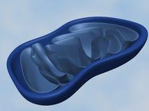 Mitochondries Photos libres de droits