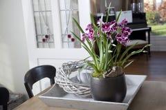Mitonia orchidea w wnętrzu Obrazy Royalty Free