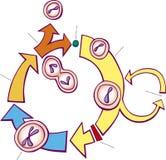 Mitosis diagram Royalty Free Stock Photos
