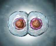 Mitosis. Stage two Stock Image