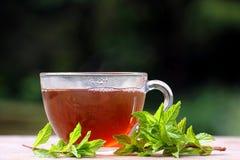 Miętowa ziołowa herbata Zdjęcia Stock