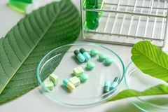Mitragyna speciosa korth kratom drug plant with pills in labor. Mitragyna speciosa korth kratom drug plant with pills in the laboratory research royalty free stock photos