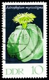 Mitre, Cacti serie, circa 1970. MOSCOW, RUSSIA - MARCH 23, 2019: Postage stamp printed in Germany, Democratic Republic shows Mitre, Cacti serie, circa 1970 stock image