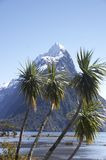 Mitre peak 3 (NZ). Mitre peak, New-Zealand at Milford Sound with a cabbage tree in front stock photography