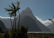 Mitre Peak and cabbage tree Stock Images