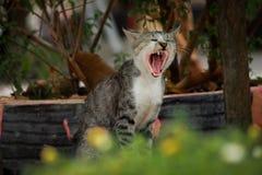 Mitret załoga | kot Obrazy Stock