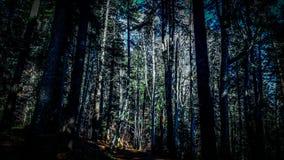 Mitt av skogen arkivbilder