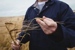 Mitt- avsnitt av bonden som kontrollerar hans skördar i fältet Royaltyfria Bilder