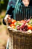 Mitt- avsnitt av den kvinnliga bonden som rymmer en korg av grönsaker Royaltyfri Bild