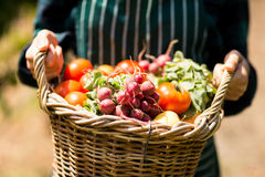 Mitt- avsnitt av den kvinnliga bonden som rymmer en korg av grönsaker Royaltyfri Foto