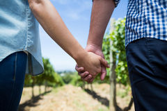 Mitt- avsnitt av parinnehavhänder på vingården Royaltyfria Foton