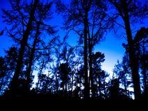 Mitt fotografi Arkivbild