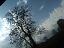 Mitt träd av liv Arkivfoton