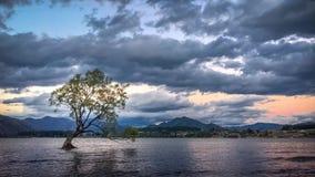 Mitt Wanaka träd på solnedgången i Nya Zeeland lager videofilmer