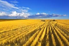 Mittag auf Feldern von Montana Lizenzfreie Stockfotos