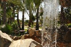 Mittagessen unter den Palmen stockbilder