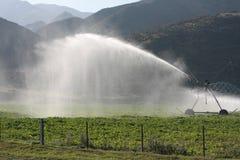 Mitte-Drehzapfen Bewässerung Stockfoto