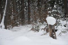 Mitte eines tiefen Waldes stockbilder