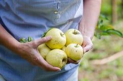 Mittelalterfrau hält Äpfel im Garten stockbilder