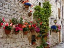 Mittelalterliche Blumenbildschirmanzeige Stockfotos