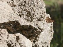 Mittelalterliche Steinwand stockfotos