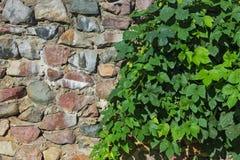 Mittelalterliche Steinwand und grüne Hecke Stockfoto