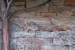 Mittelalterliche Wand des Kalksteins des Steins blockiert Beschaffenheitshintergrund-Oberflächenbaumast auf der linken Seite Lizenzfreie Stockbilder