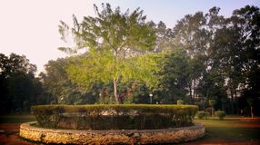 Mittelbaum auf Rose Garden Ludhiana Stockbilder