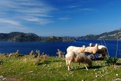 Mittelmeer und Schafe Stockfotografie