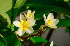 Mittelmeerblumen Stockfotografie