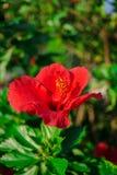 Mittelmeerblumen Stockbilder