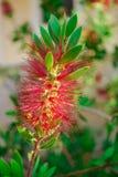Mittelmeerblumen Lizenzfreie Stockbilder