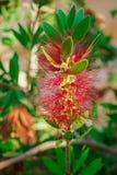 Mittelmeerblumen Stockfotos