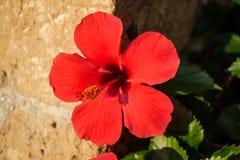 Mittelmeerblumen Stockfoto