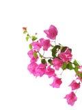 Mittelmeerblumen getrennt auf Weiß Lizenzfreie Stockfotos