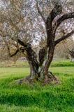 Mittelmeergarten, Nahaufnahme die Niederlassung lizenzfreie stockfotos