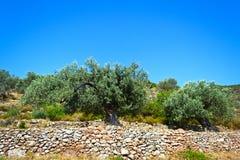 Mittelmeergarten, Nahaufnahme die Niederlassung Stockfotografie