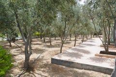 Mittelmeergarten, Nahaufnahme die Niederlassung Lizenzfreies Stockbild