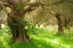 Mittelmeergarten, Nahaufnahme die Niederlassung Lizenzfreie Stockfotografie