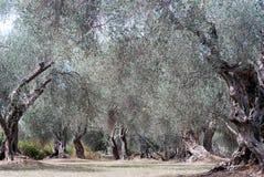 Mittelmeergarten, Nahaufnahme die Niederlassung Stockfotos