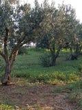 Mittelmeergarten, Nahaufnahme die Niederlassung Stockbilder