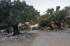Mittelmeergarten, Nahaufnahme die Niederlassung stockfoto