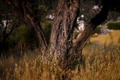 Mittelmeergarten, Nahaufnahme die Niederlassung Kas, die Türkei Lizenzfreies Stockfoto
