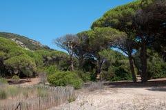 Mittelmeerkiefernwald und -garten mit Zaun Lizenzfreie Stockbilder