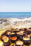 Mittelmeerseeigel Stockfoto