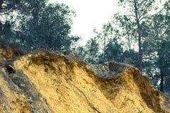 Mittelmeerwald schön Lizenzfreies Stockfoto