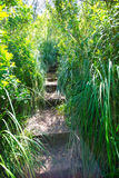 Mittelmeerwaldlandschaft in Menorca nahe Macarella Lizenzfreie Stockfotos