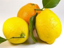 Mittelmeerzitrusfrucht Lizenzfreie Stockfotografie
